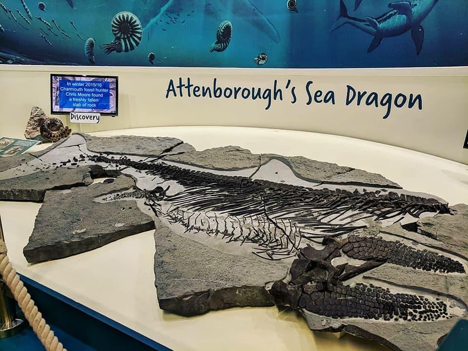 Charmouth S Sea Dragon And Dippy The Dinosaur